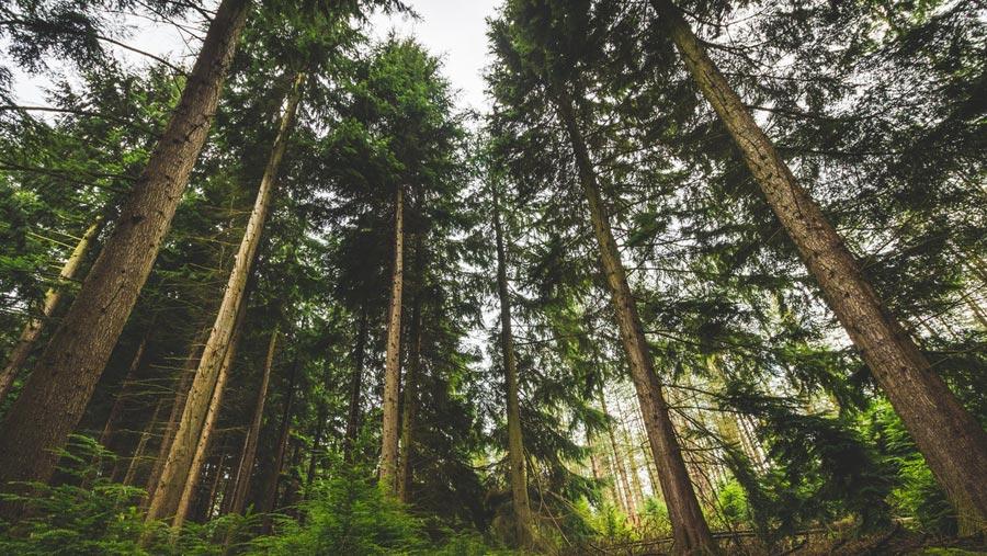 ecosia motore di ricerca pianta alberi